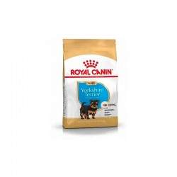 Bhn Yorkshire Terrier Puppy 7,5Kg