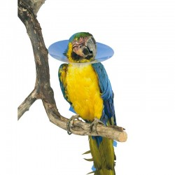 Collar Isabelino Buster Para Aves 80Mm XS