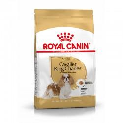 Bhn Cavalier King Charles 1,5Kg