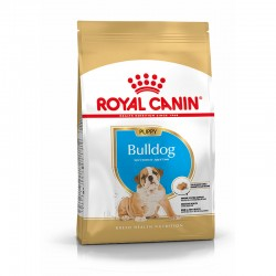 Bhn Bulldog Puppy 3Kg