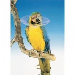 Collar Isabelino Buster Para Aves 140Mm M