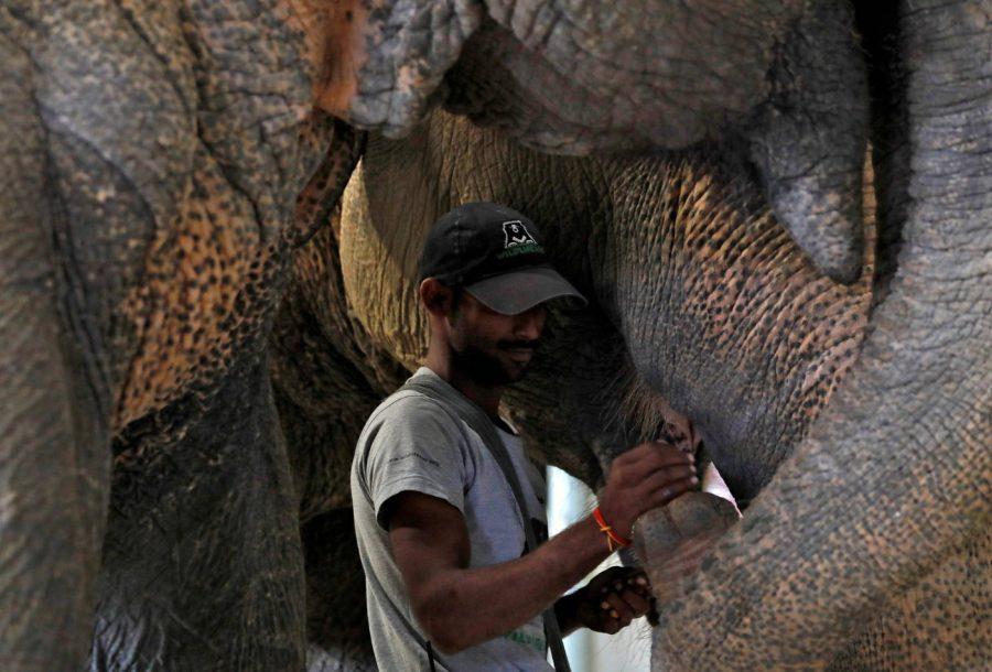 India abre su primer hospital para elefantes