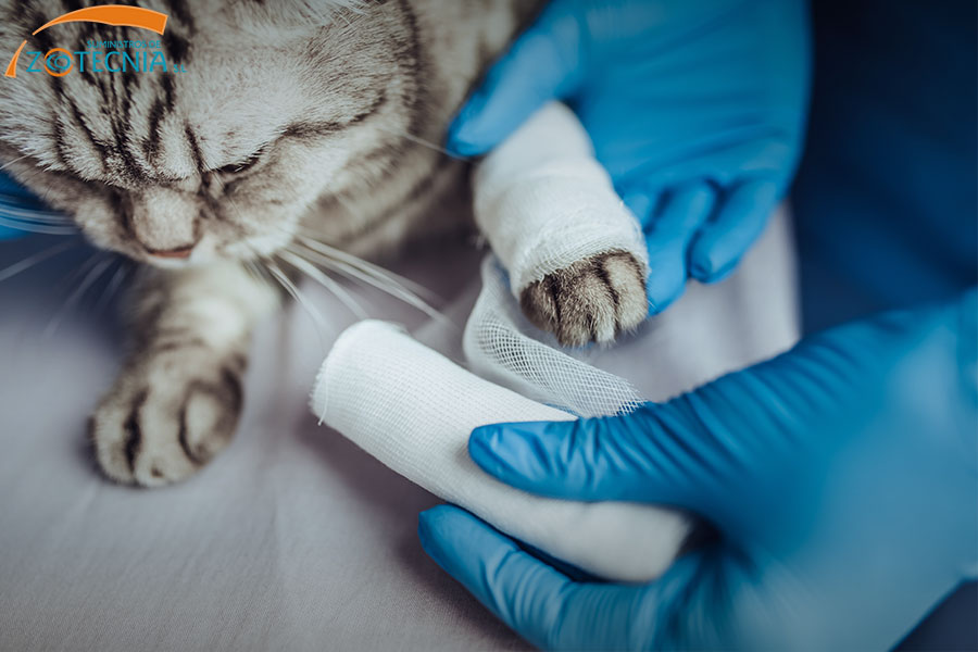 esterilizacion-animales