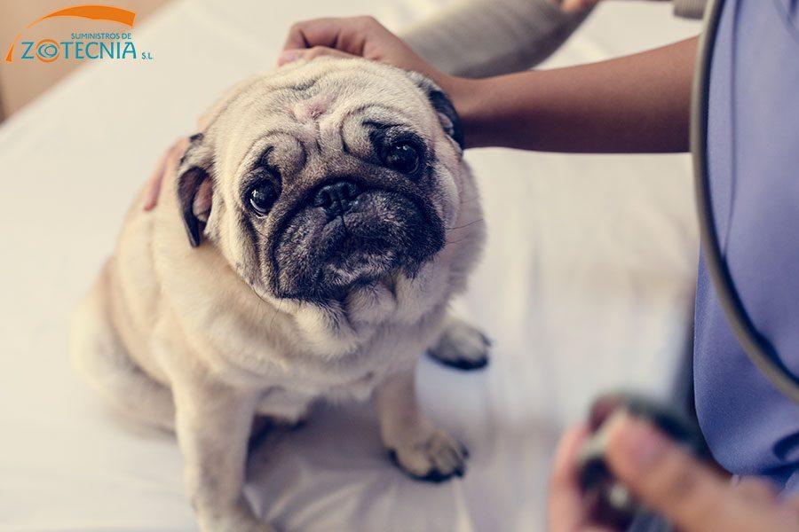 Hill's Pet Nutrition, acusada de provocar la muerte de varios perros con sus productos