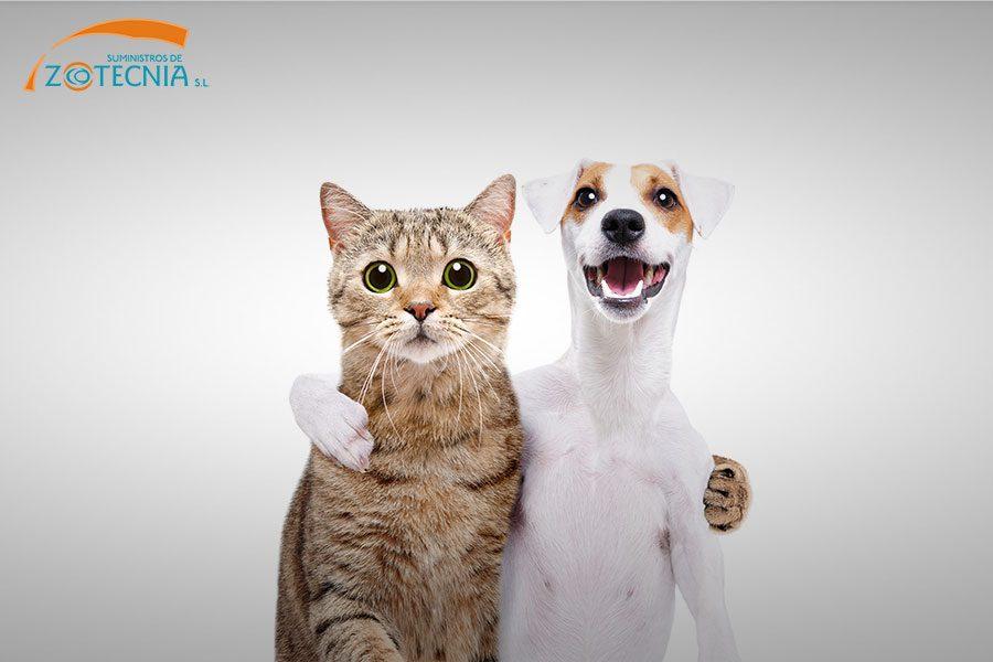 Perros o gatos: ¿Qué prefieres?