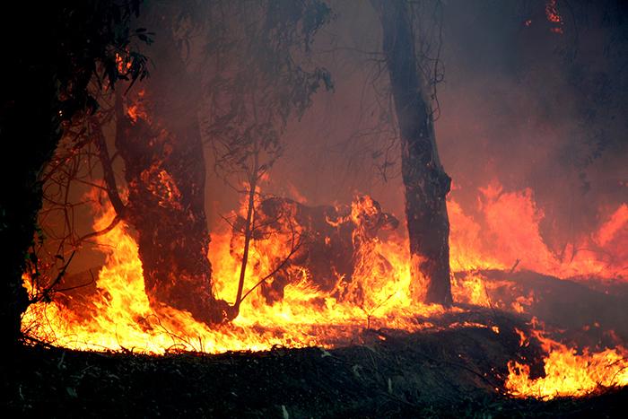 Solidaridad con los animales afectados por el incendio de Gran Canaria.