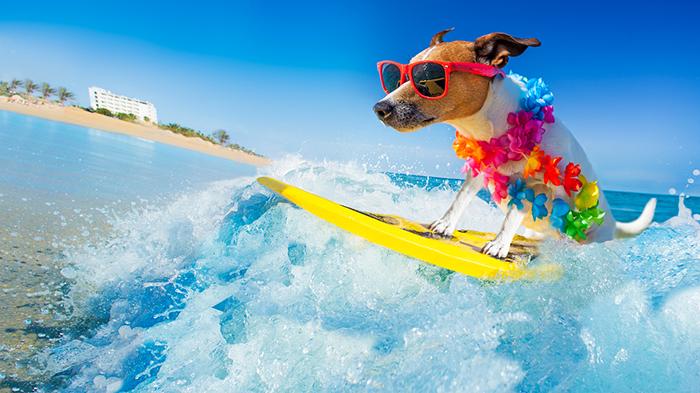Consejos para pasar las vacaciones con tu mascota