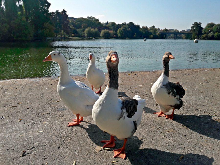 El foie gras que lucha contra el maltrato animal