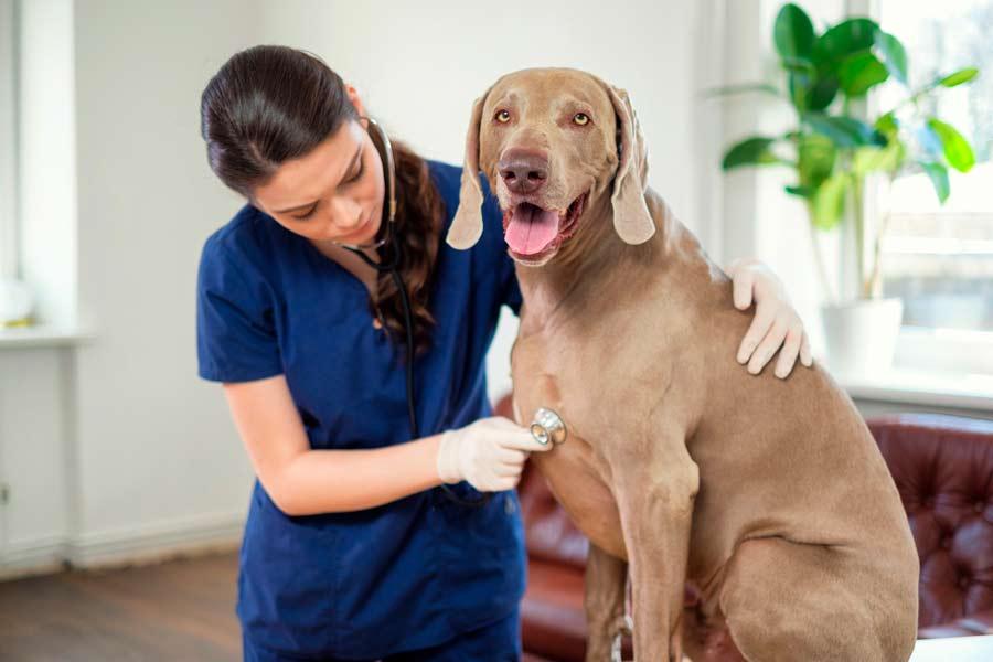 Coronavirus y animales. Recomendaciones para veterinarios y clínicas