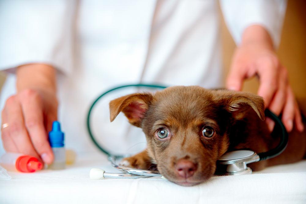 coronavirus y clínicas veterinarias