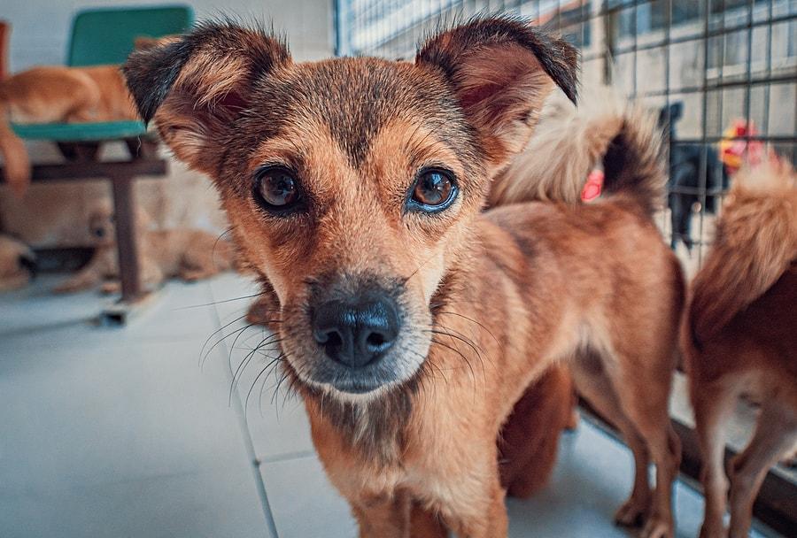 traqueobronquitis infecciosa canina como prevenir